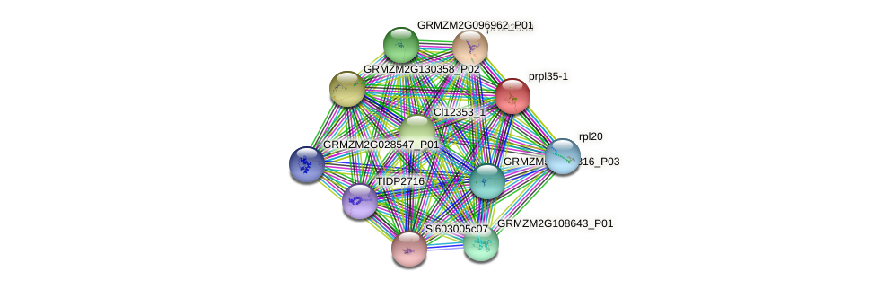 prpl35-1 protein (Zea mays) - STRING interaction network