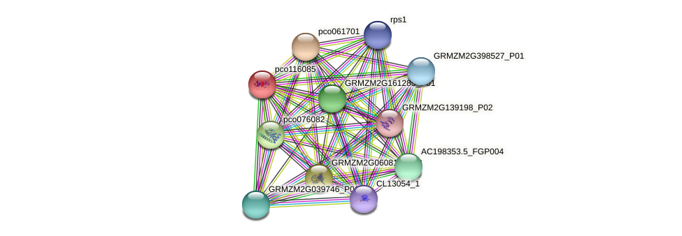 pco116085 protein (Zea mays) - STRING interaction network