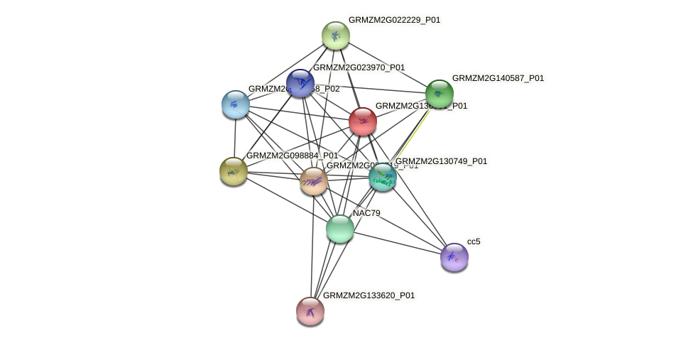 GRMZM2G136901_P01 protein (Zea mays) - STRING interaction network