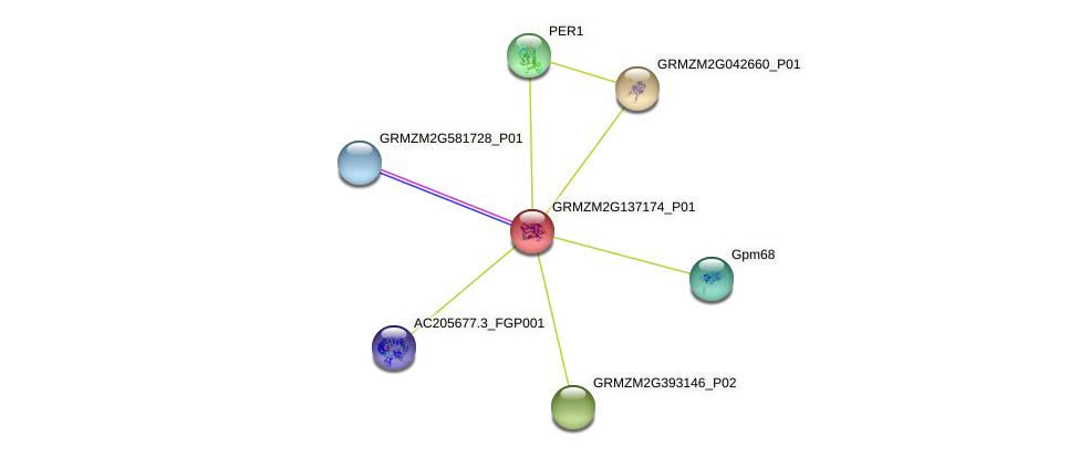 GRMZM2G137174_P01 protein (Zea mays) - STRING interaction network