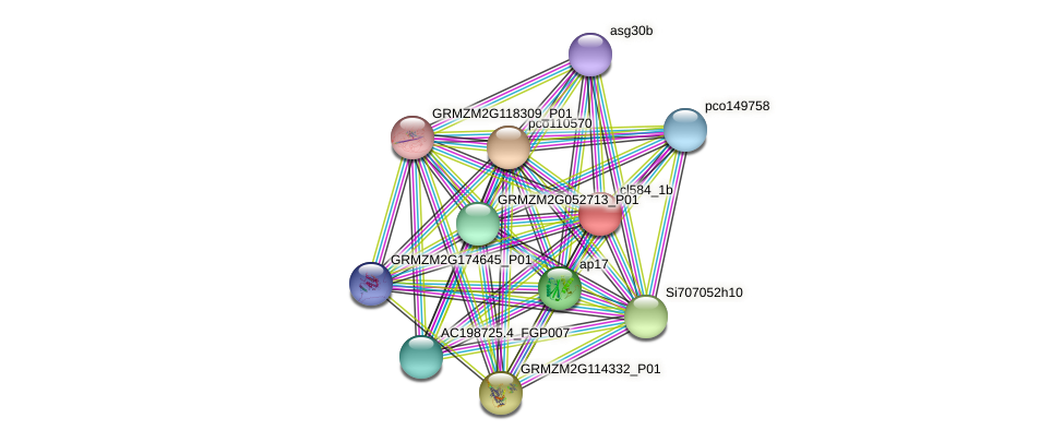 cl584_1b protein (Zea mays) - STRING interaction network