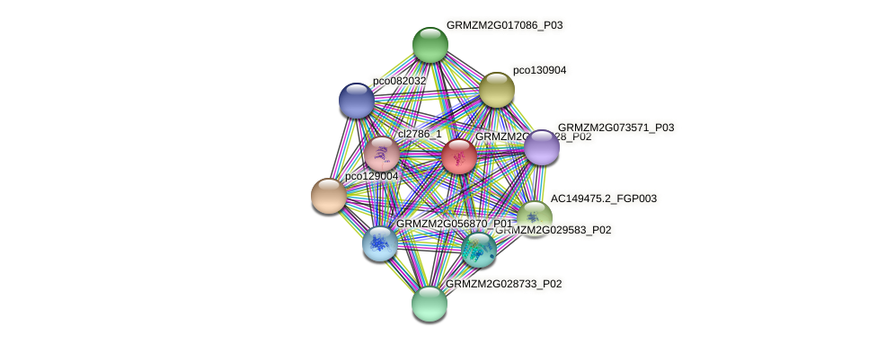 GRMZM2G137528_P01 protein (Zea mays) - STRING interaction network