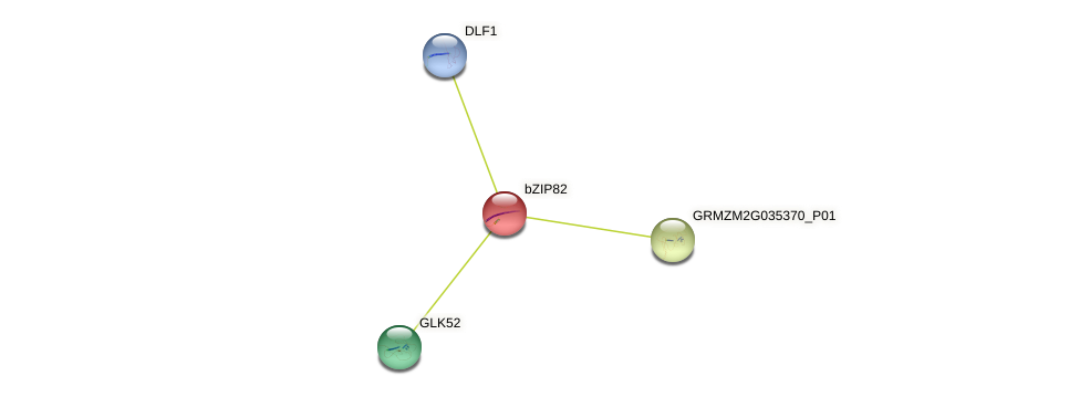bZIP82 protein (Zea mays) - STRING interaction network