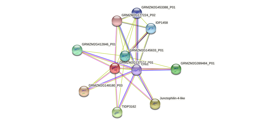 GRMZM2G137574_P01 protein (Zea mays) - STRING interaction network
