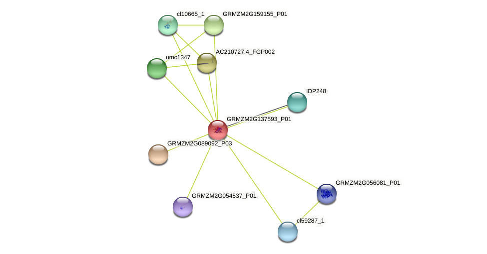 GRMZM2G137593_P01 protein (Zea mays) - STRING interaction network