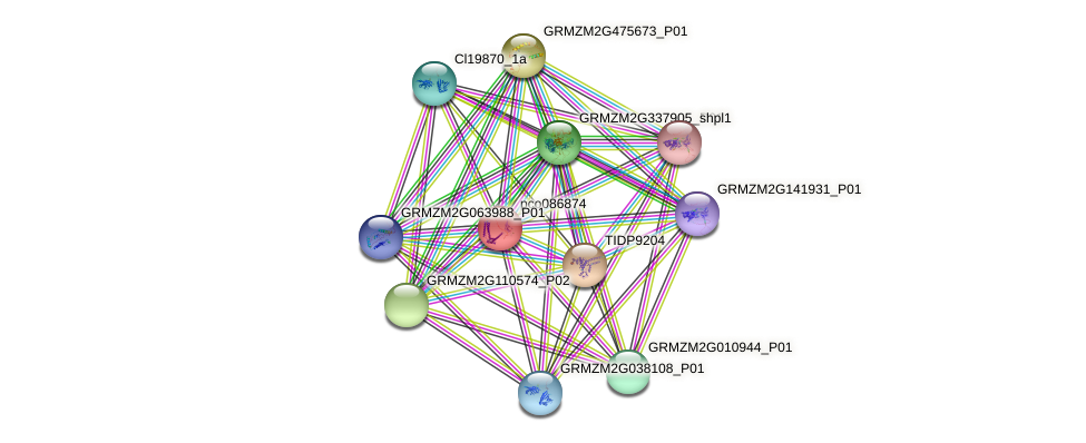 pco086874 protein (Zea mays) - STRING interaction network