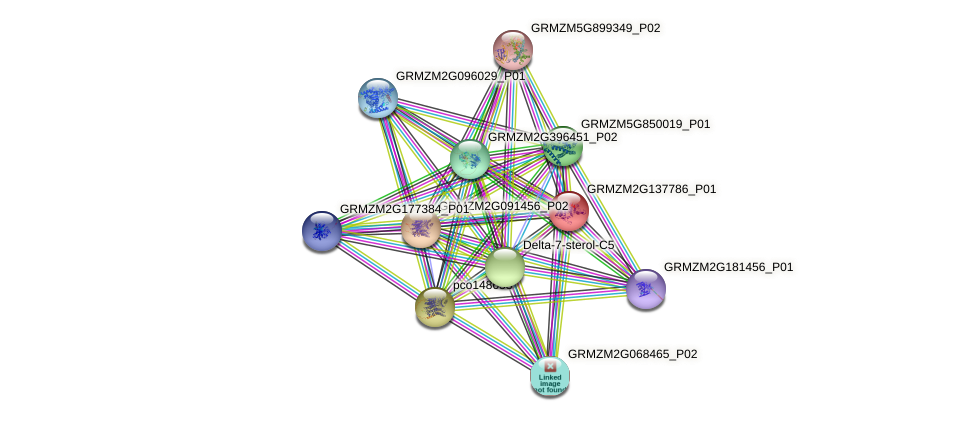 GRMZM2G137786_P01 protein (Zea mays) - STRING interaction network