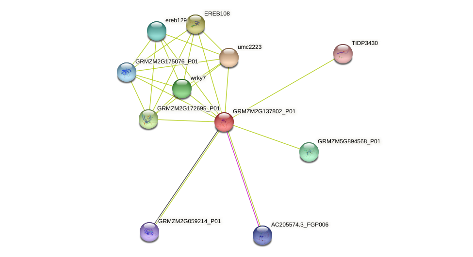 100281947 protein (Zea mays) - STRING interaction network