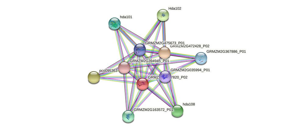 GRMZM2G137820_P02 protein (Zea mays) - STRING interaction network