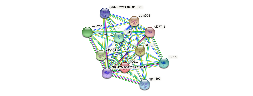 POD1 protein (Zea mays) - STRING interaction network