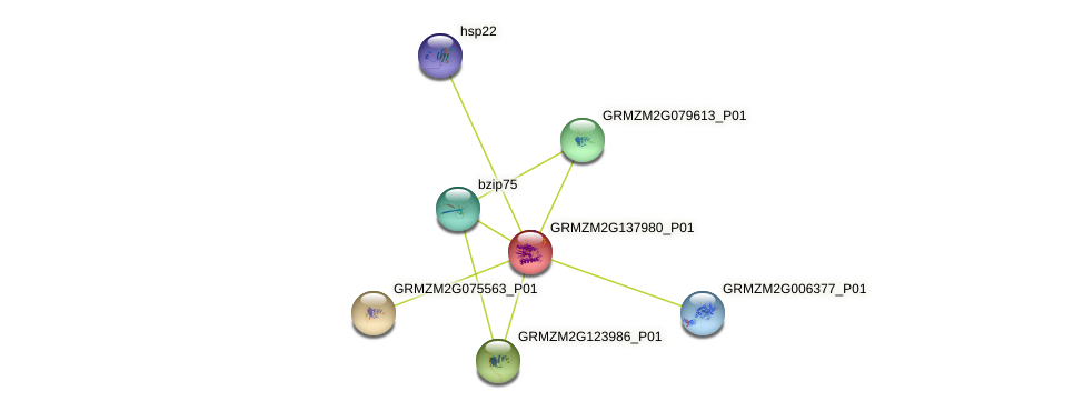 GRMZM2G137980_P01 protein (Zea mays) - STRING interaction network