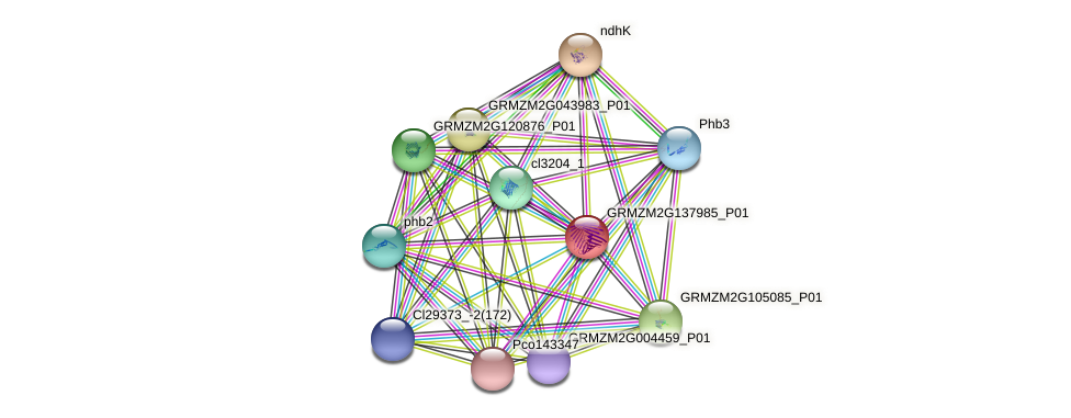 103639463 protein (Zea mays) - STRING interaction network