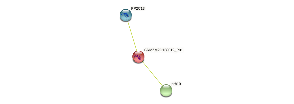 103632560 protein (Zea mays) - STRING interaction network