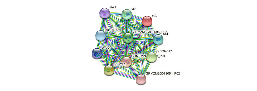 sugary1 protein (Zea mays) - STRING interaction network