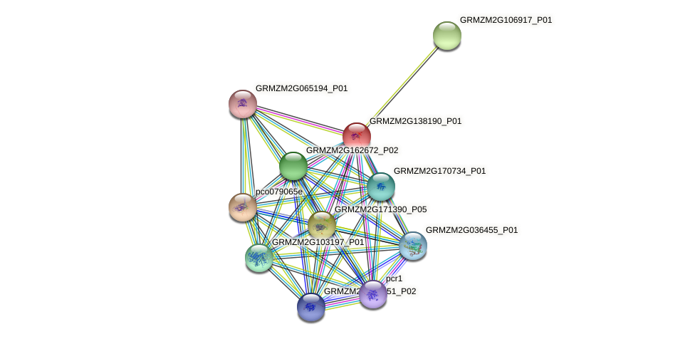 GRMZM2G138190_P01 protein (Zea mays) - STRING interaction network
