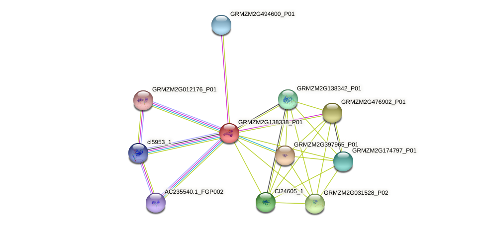GRMZM2G138338_P01 protein (Zea mays) - STRING interaction network