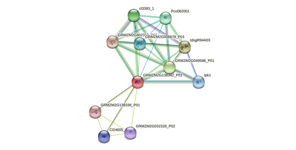 GRMZM2G138342_P01 protein (Zea mays) - STRING interaction network