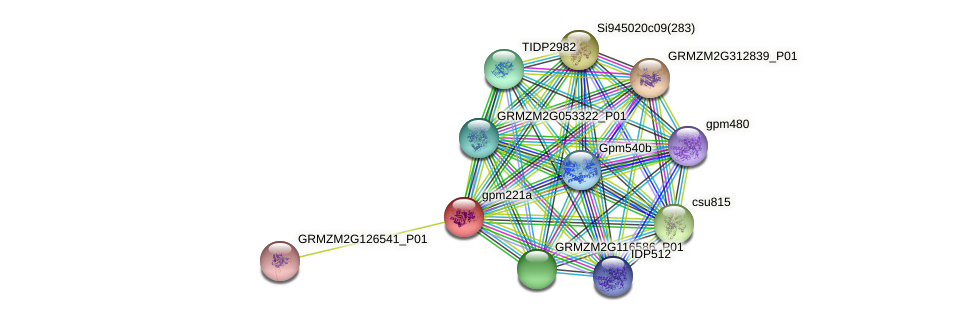 gpm221a protein (Zea mays) - STRING interaction network