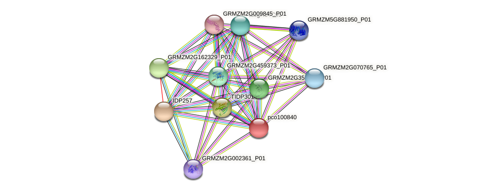 pco100840 protein (Zea mays) - STRING interaction network