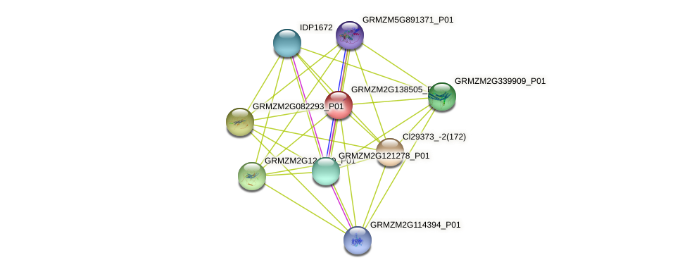 GRMZM2G138505_P01 protein (Zea mays) - STRING interaction network