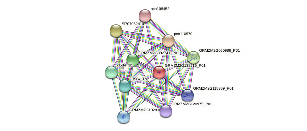GRMZM2G138516_P01 protein (Zea mays) - STRING interaction network