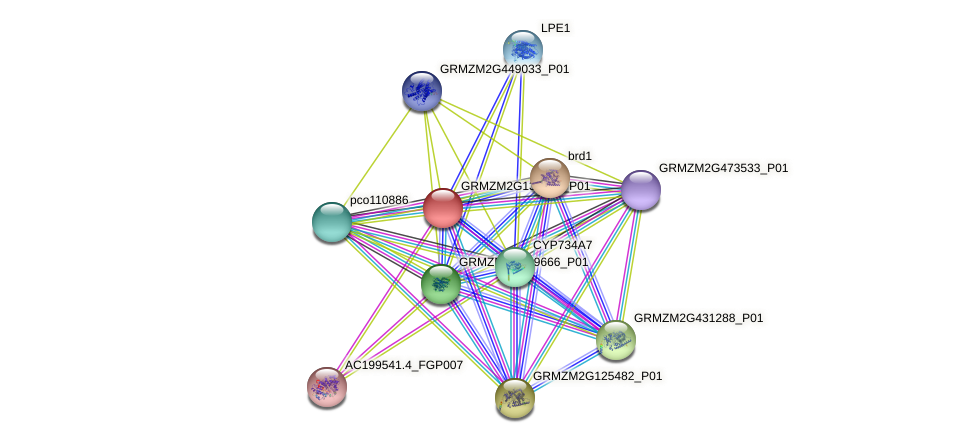 GRMZM2G138750_P01 protein (Zea mays) - STRING interaction network