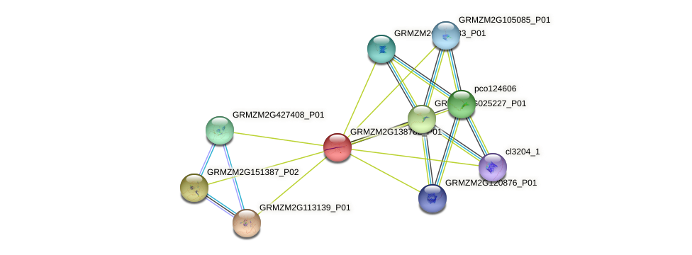 GRMZM2G138782_P01 protein (Zea mays) - STRING interaction network