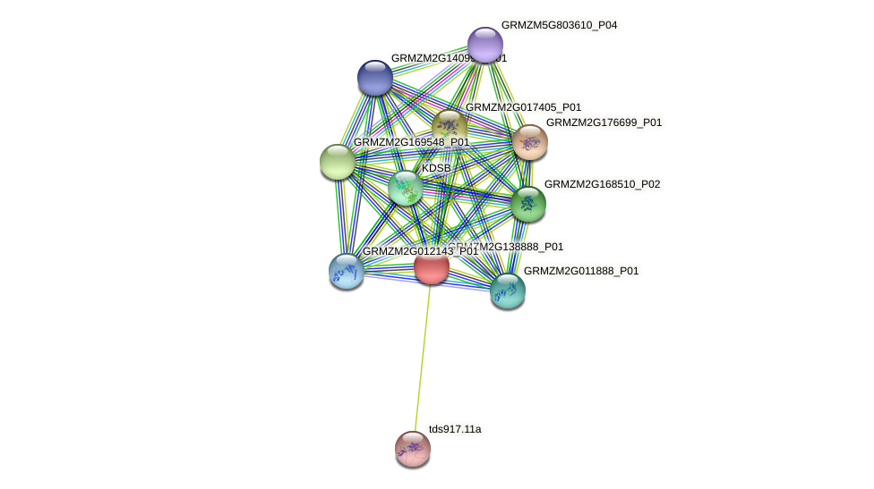 GRMZM2G138888_P01 protein (Zea mays) - STRING interaction network