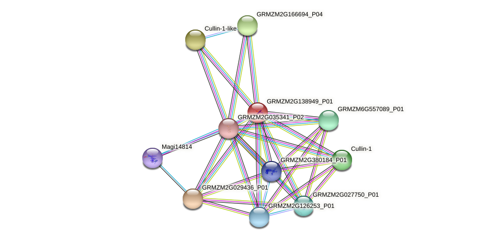 103654276 protein (Zea mays) - STRING interaction network