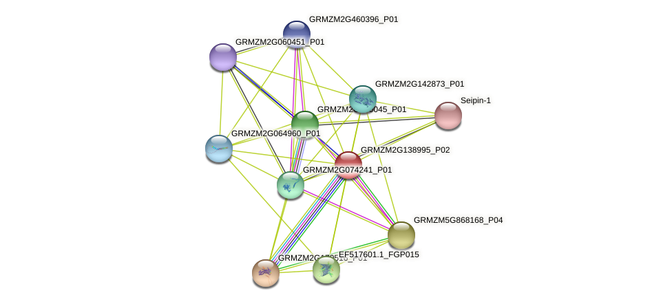 Zm.86891 protein (Zea mays) - STRING interaction network
