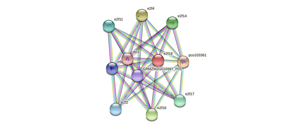 e2f18 protein (Zea mays) - STRING interaction network