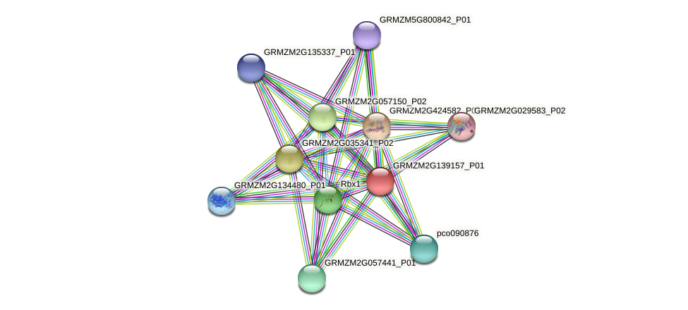 GRMZM2G139157_P01 protein (Zea mays) - STRING interaction network