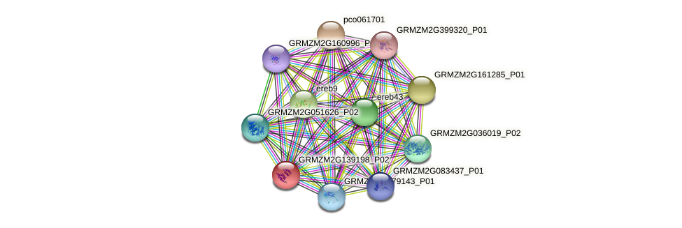 GRMZM2G139198_P02 protein (Zea mays) - STRING interaction network