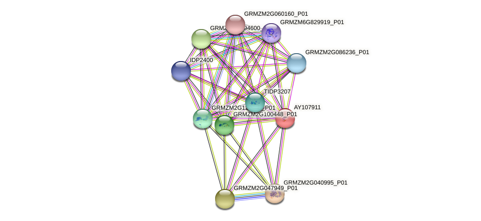 AY107911 protein (Zea mays) - STRING interaction network