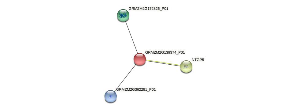 GRMZM2G139374_P01 protein (Zea mays) - STRING interaction network