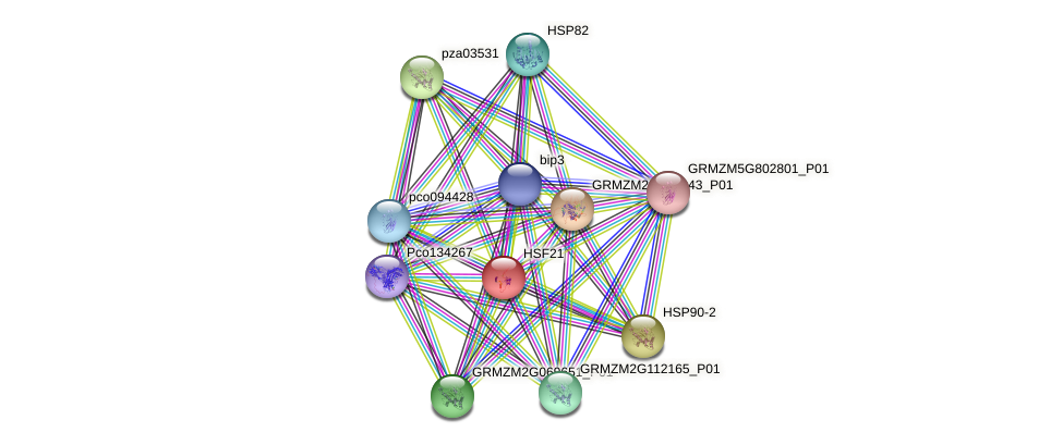 HSF21 protein (Zea mays) - STRING interaction network