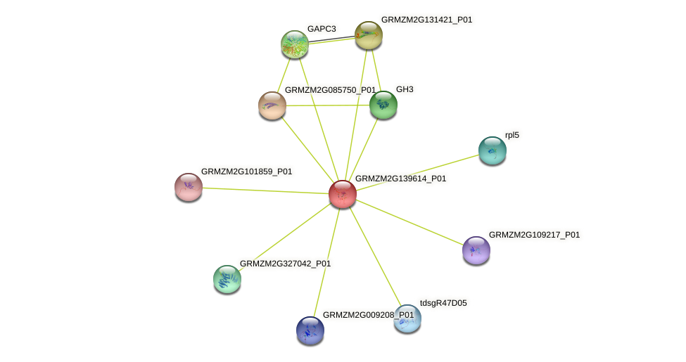 GRMZM2G139614_P01 protein (Zea mays) - STRING interaction network