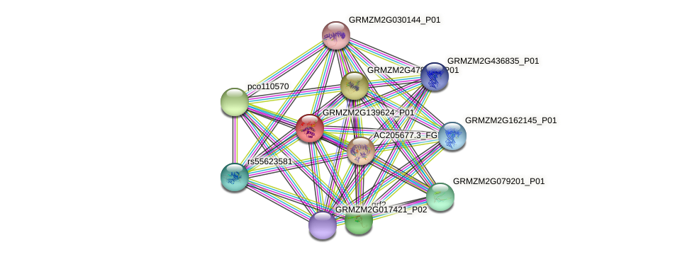 GRMZM2G139624_P01 protein (Zea mays) - STRING interaction network