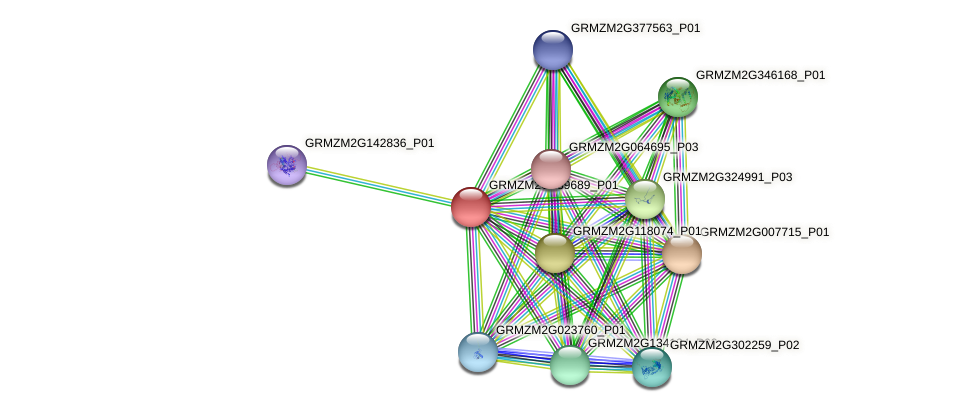GRMZM2G139689_P01 protein (Zea mays) - STRING interaction network
