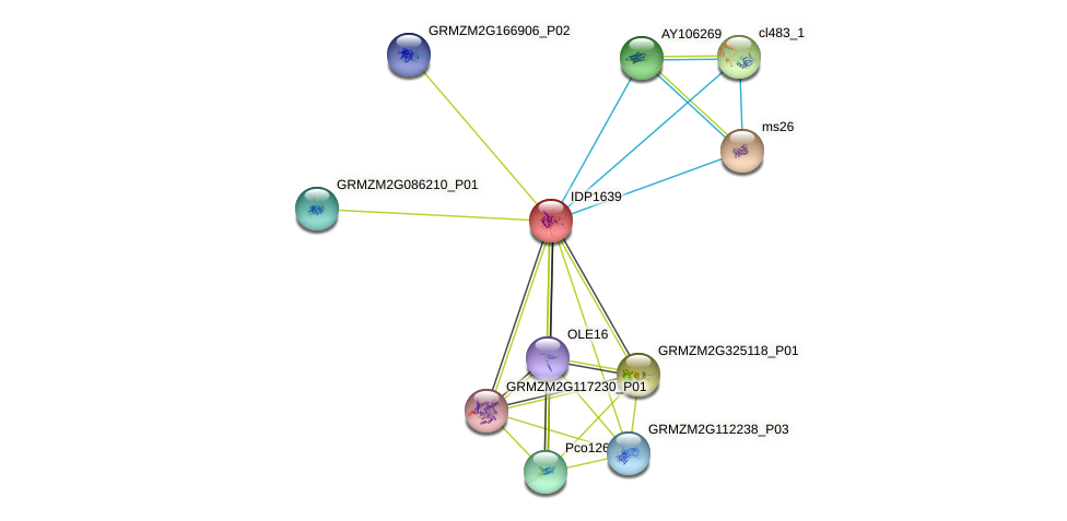 IDP1639 protein (Zea mays) - STRING interaction network