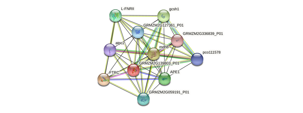 GRMZM2G139803_P01 protein (Zea mays) - STRING interaction network