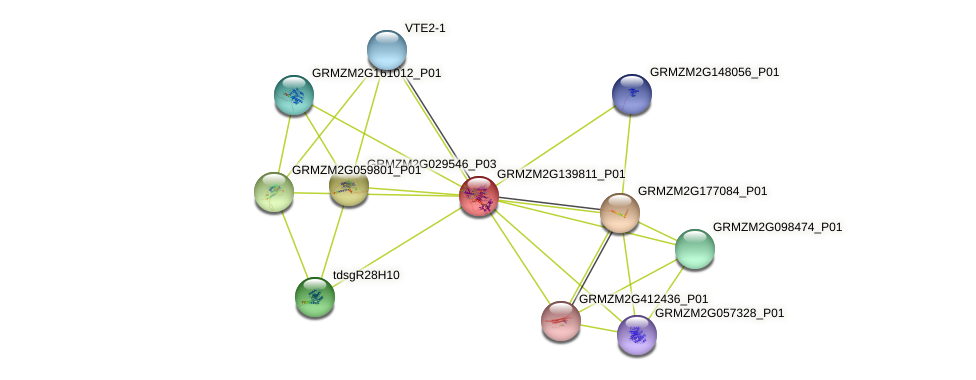 GRMZM2G139811_P01 protein (Zea mays) - STRING interaction network