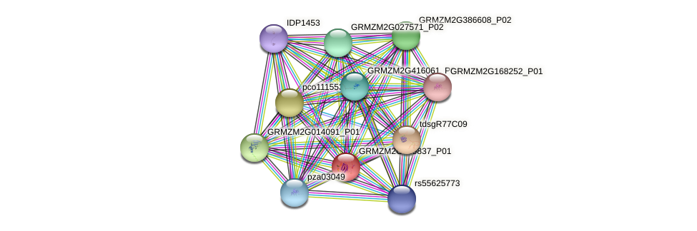 GRMZM2G139837_P01 protein (Zea mays) - STRING interaction network