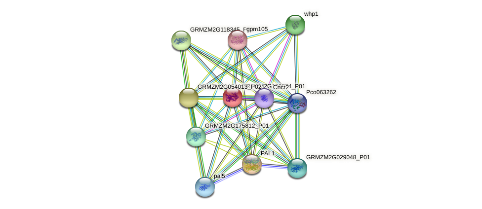 GRMZM2G139874_P01 protein (Zea mays) - STRING interaction network