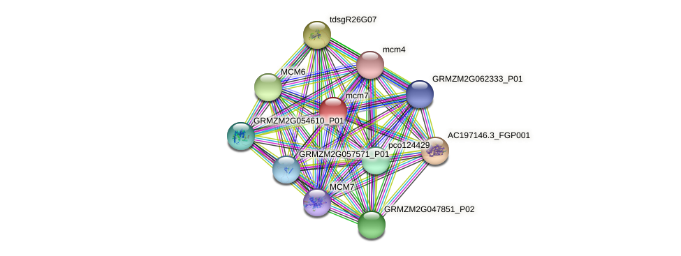 GRMZM2G139894_P01 protein (Zea mays) - STRING interaction network