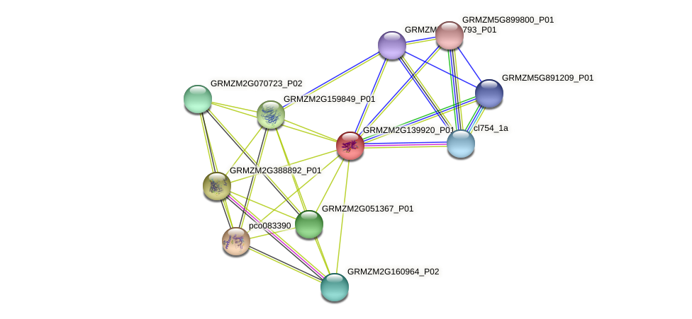 GRMZM2G139920_P01 protein (Zea mays) - STRING interaction network