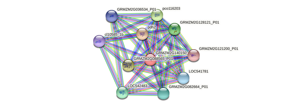 Zm.123671 protein (Zea mays) - STRING interaction network