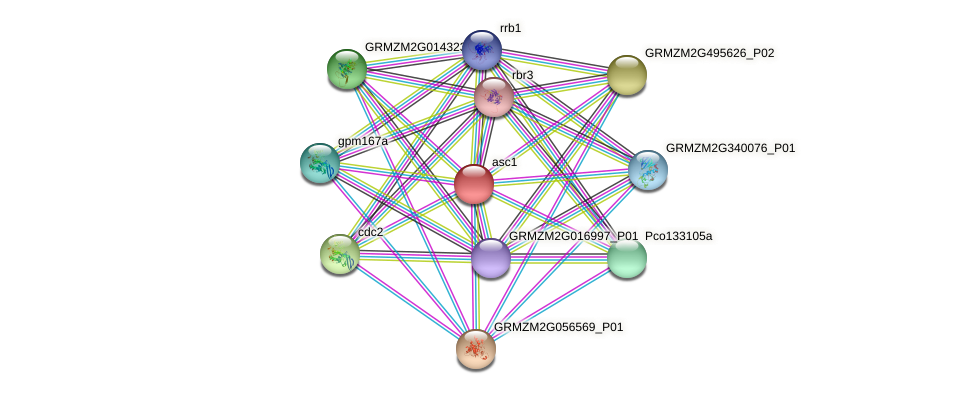 GRMZM2G140633_P01 protein (Zea mays) - STRING interaction network