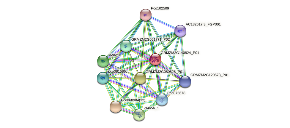 GRMZM2G140824_P01 protein (Zea mays) - STRING interaction network