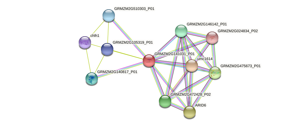 GRMZM2G141031_P01 protein (Zea mays) - STRING interaction network